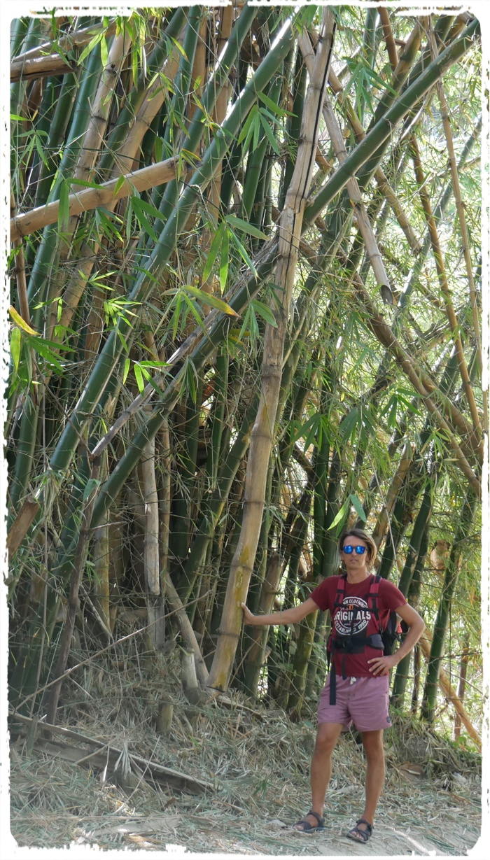 This Bamboo could also be our mast